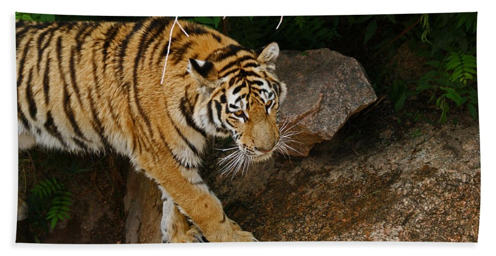 Tiger Hand Towel featuring the photograph The Tiger by Ernie Echols