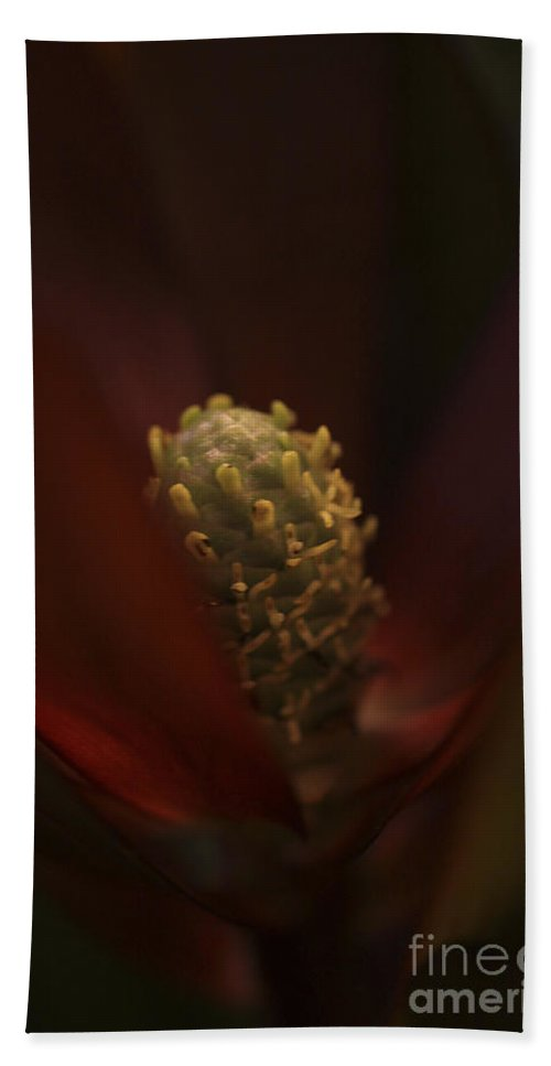 Flower Hand Towel featuring the photograph The Unknown Flower by Deborah Benoit