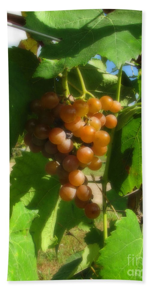 Grapes Hand Towel featuring the photograph The Vineyard by September Stone