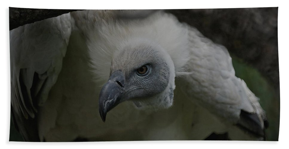 Animals Bath Sheet featuring the photograph The Vulture Dry Brushed by Ernie Echols
