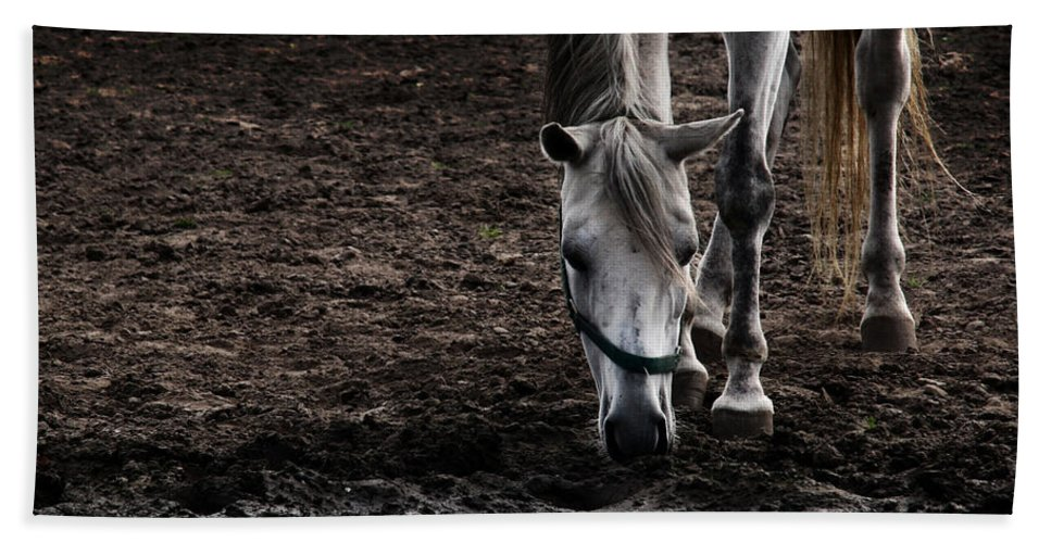 Horse Hand Towel featuring the photograph The Water Reflection by Angel Ciesniarska