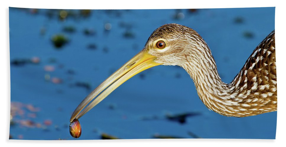 Limpkin Bath Sheet featuring the photograph The Water's Edge Seafood Cafe by Mark Andrew Thomas