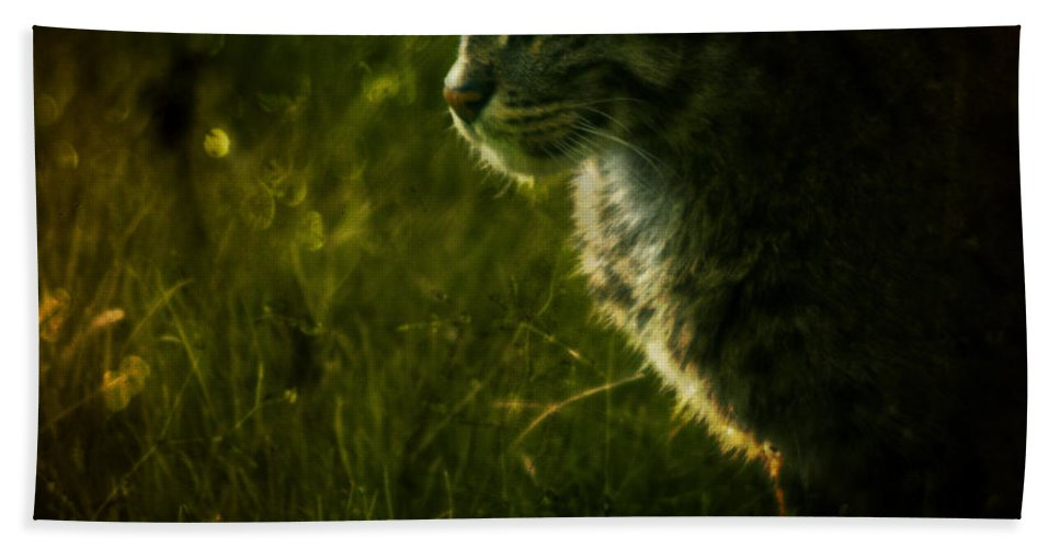 Zoo Hand Towel featuring the photograph The Wild Cat by Angel Ciesniarska