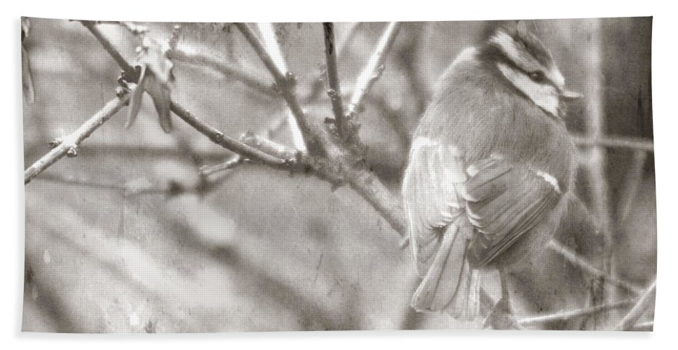 Blue Tit Hand Towel featuring the photograph The Winter Time by Angel Ciesniarska