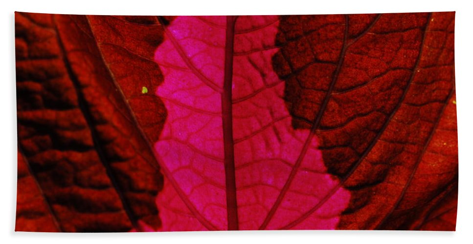 Plant Bath Sheet featuring the photograph There Will Be Blood by Donna Blackhall