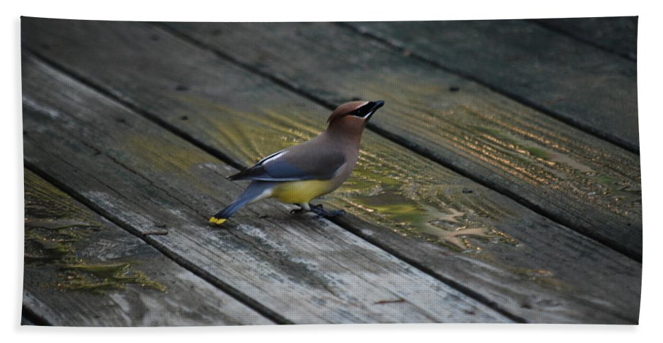 Cedar Waxwing Hand Towel featuring the photograph They Call Me Cedar by Lori Tambakis