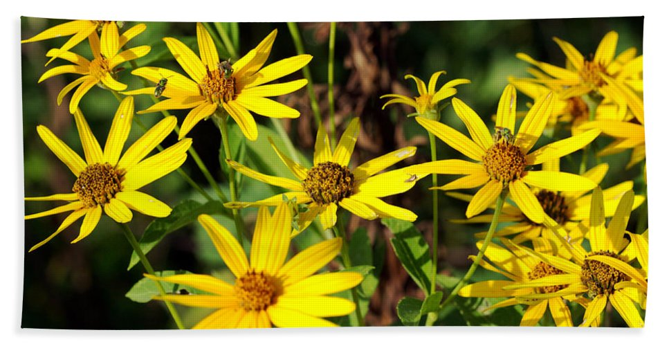 Beautiful Hand Towel featuring the photograph Thin-leaved Sunflower by Jack R Perry