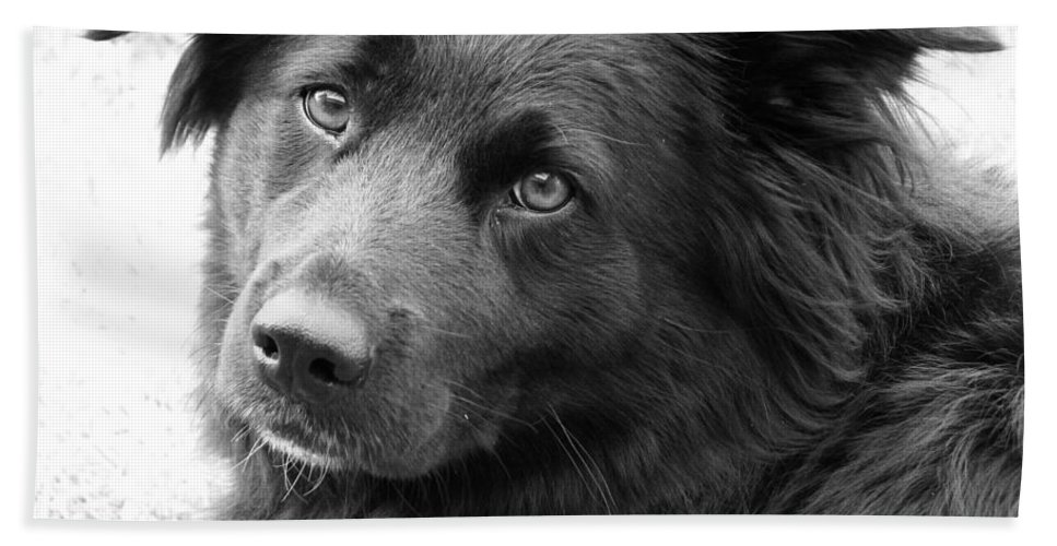 Dog Hand Towel featuring the photograph Thinking by Amanda Barcon
