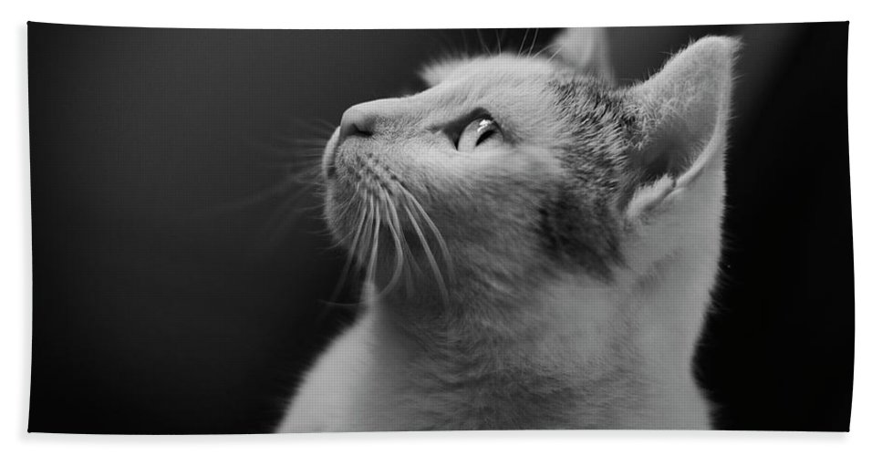 Cat Hand Towel featuring the photograph Thinking Of Mouse by Olga Valjakova