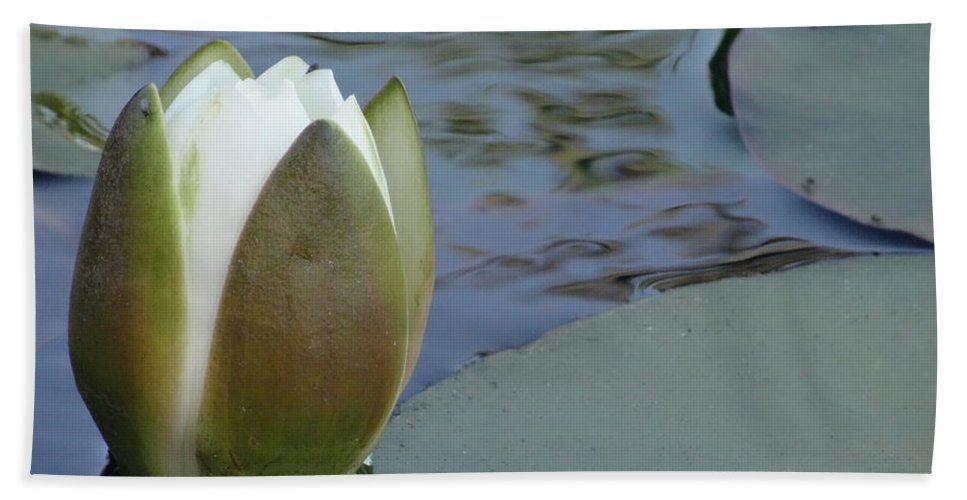 Lotus Bud Bath Sheet featuring the mixed media This Buds For You by Richard Laeton