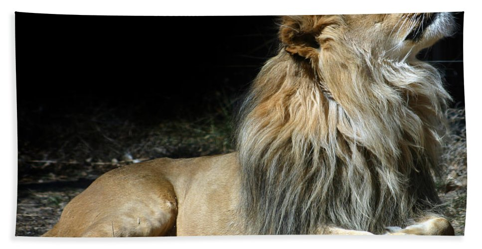 Lion Bath Towel featuring the photograph This Is My Best Side by Anthony Jones