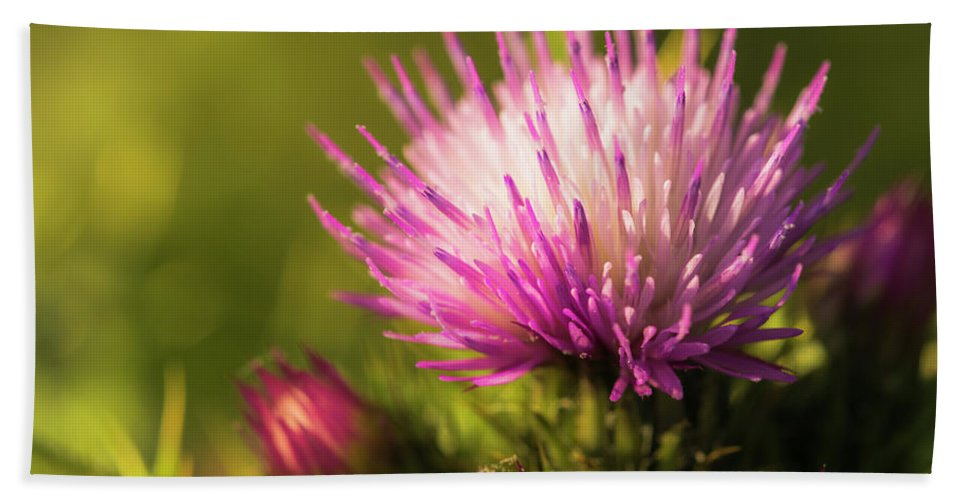 Floral Bath Sheet featuring the photograph Thistle Flowers by Ignacio Leal Orozco