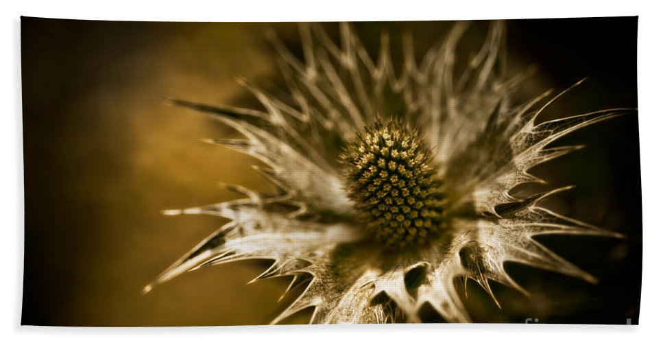 Asteraceae Family Bath Sheet featuring the photograph Thorny Crown by Venetta Archer
