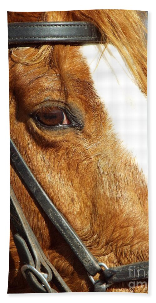 Horse Bath Sheet featuring the photograph Those Big Brown Eyes by Caryl J Bohn