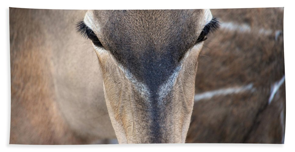 Deer Bath Sheet featuring the photograph Those Eyes by Donna Blackhall