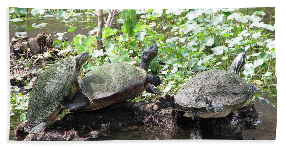 Turtle Bath Sheet featuring the photograph Three Amigos by Stacey May