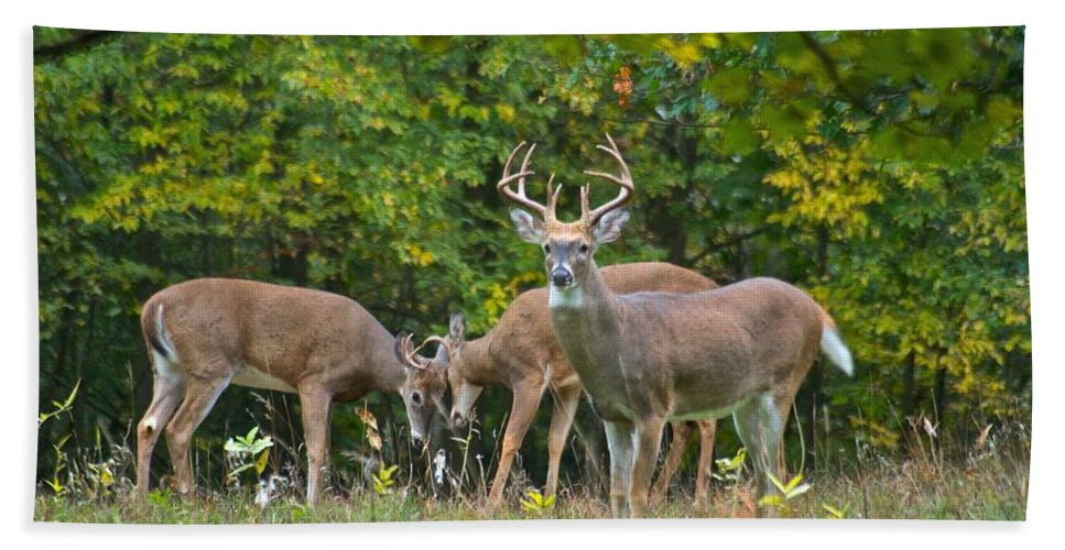 Three Hand Towel featuring the photograph Three Bucks_0054_4463 by Michael Peychich