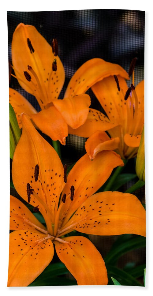 Liliaceae Hand Towel featuring the photograph Three Lilies by Ed Gleichman