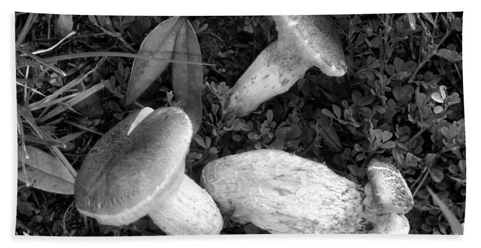 Three Mushrooms Bath Sheet featuring the photograph Three Mushrooms by David Lee Thompson