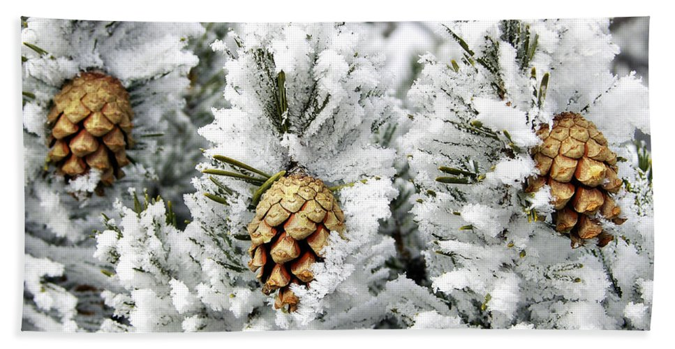 Frosty Bath Sheet featuring the photograph Three Pinecones by Marilyn Hunt