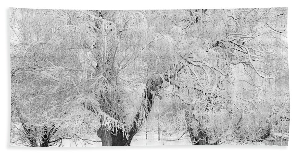 Trees Bath Sheet featuring the photograph Three Snow Frosted Trees In Black And White by James BO Insogna