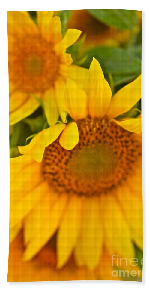 Yellow Bath Towel featuring the photograph Three Sunflowers by Nadine Rippelmeyer