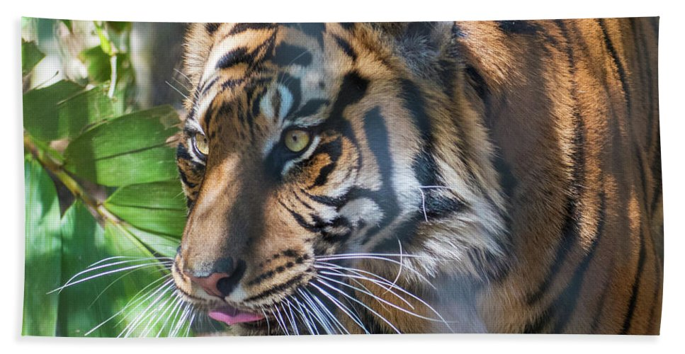 Tiger Hand Towel featuring the photograph Tiger by Andrew Lelea