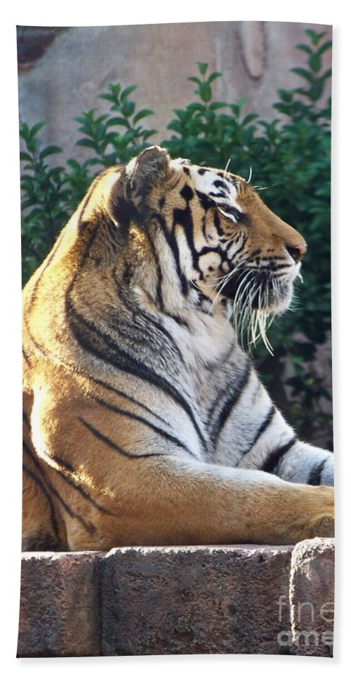Tiger Bath Sheet featuring the photograph Tiger by Carol Bradley