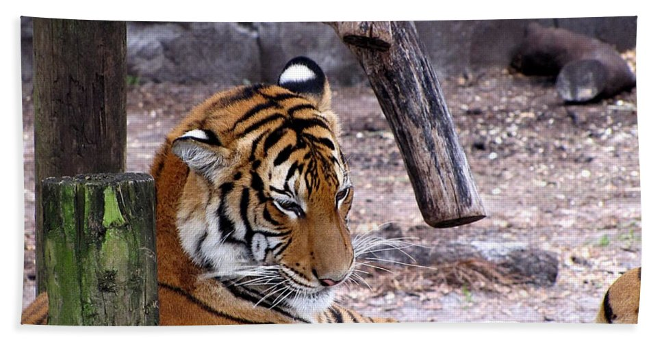Tiger Hand Towel featuring the photograph Tiger by Chris Mercer