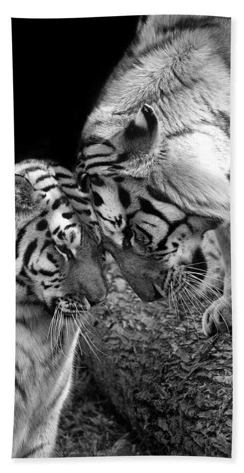 Tiger Hand Towel featuring the photograph Tiger Love by Stephanie McDowell