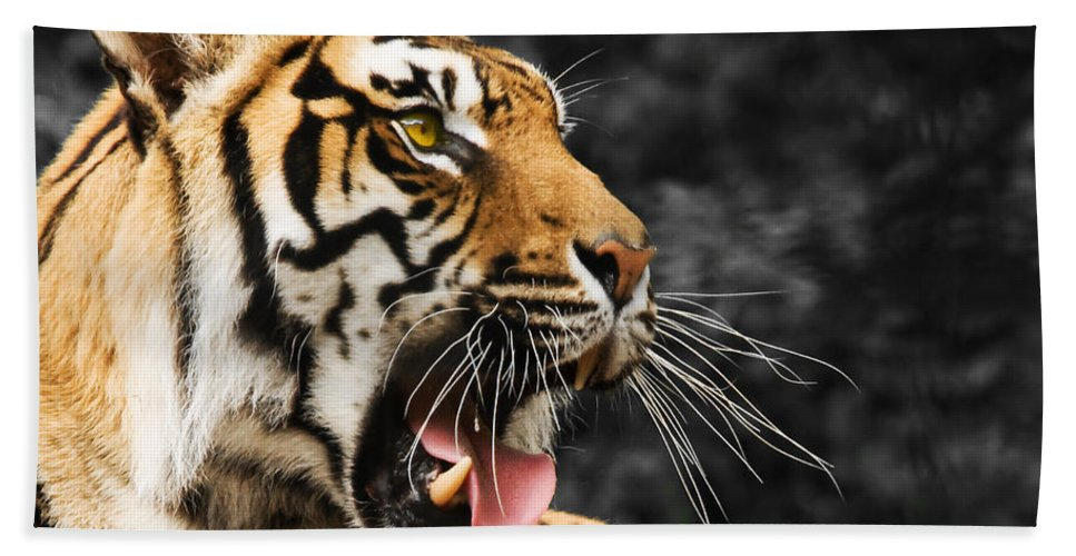 Tiger Hand Towel featuring the photograph Tiger by Svetlana Sewell