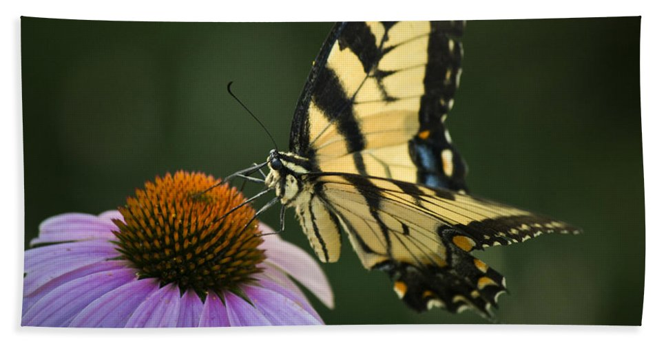 Butterfly Bath Sheet featuring the photograph Tiger Swallowtail 1 by Teresa Mucha