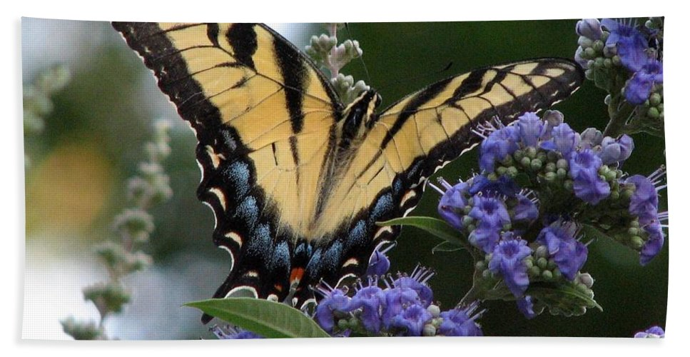 Tiger Swallowtail Hand Towel featuring the photograph Tiger Swallowtail 3 by J M Farris Photography