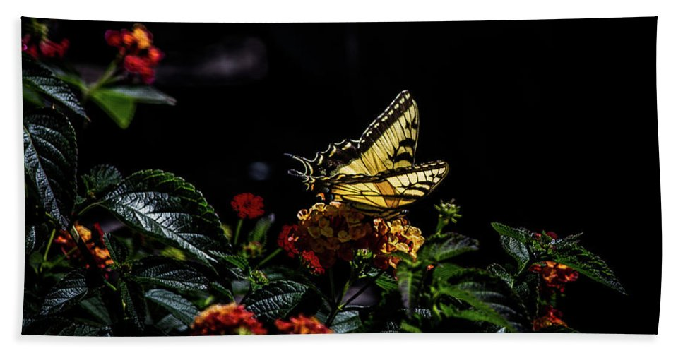 Butterfly Bath Sheet featuring the photograph Tiger Swallowtail by Anthony Evans