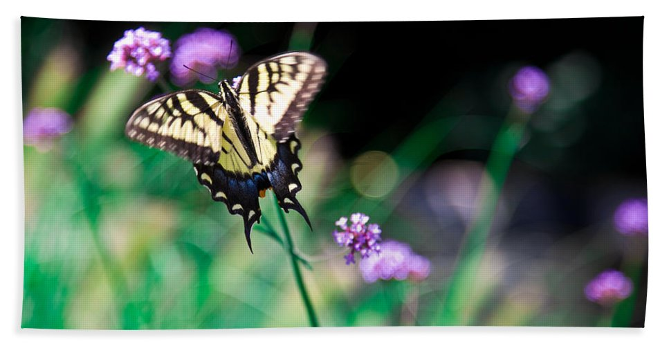 Insect Hand Towel featuring the photograph Tiger Swallowtail Butterfly by Chris Lord