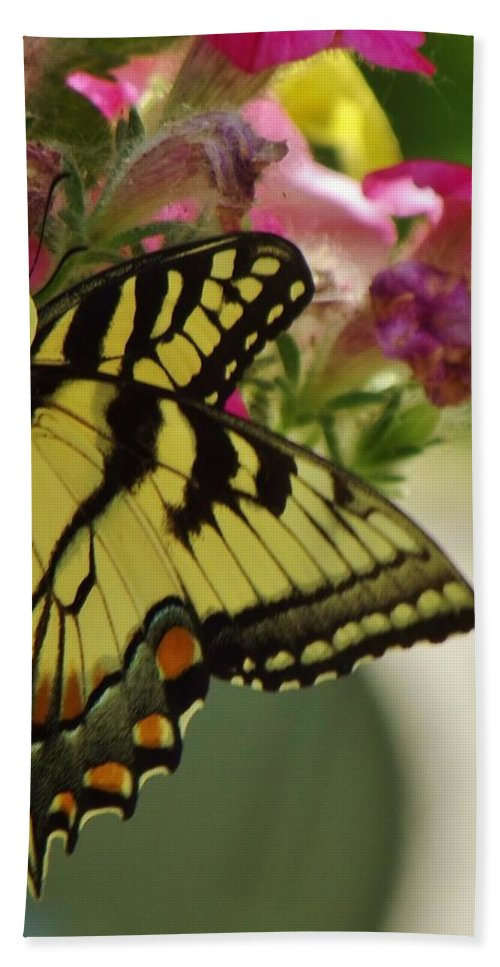 Nature Bath Sheet featuring the photograph Tiger Swallowtail Butterfly On Begonia Bloom     June      Indiana by Rory Cubel