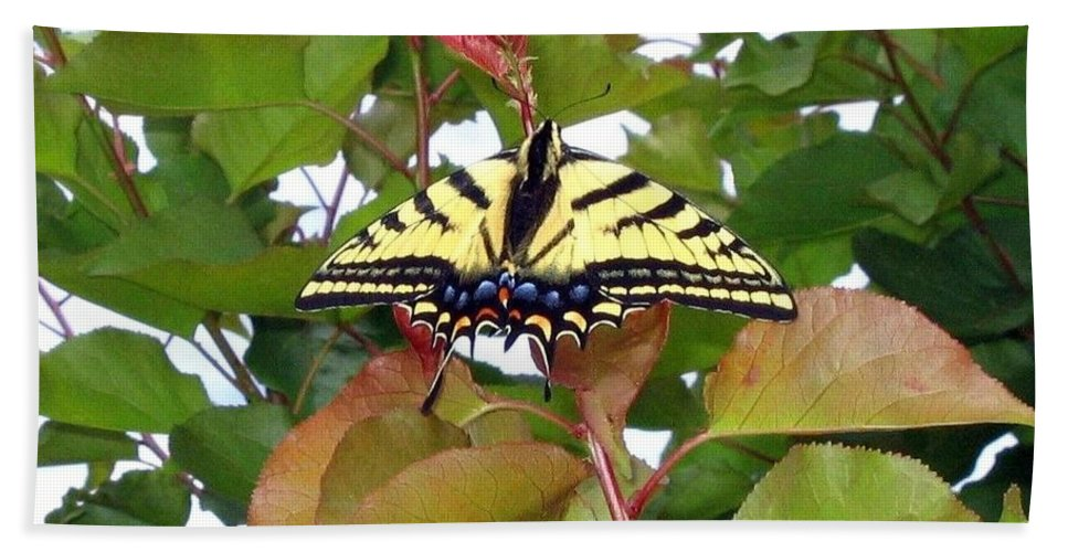 Butterfly Hand Towel featuring the photograph Tiger Swallowtail Butterfly by Will Borden