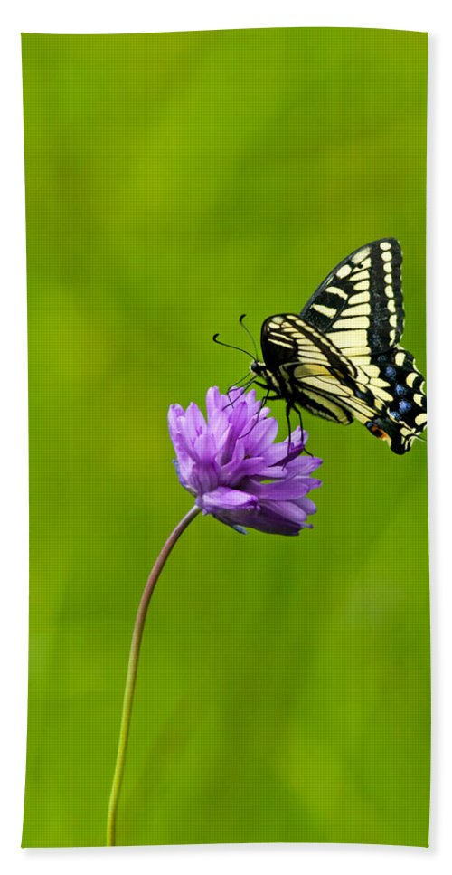 Flora Hand Towel featuring the photograph Tiger Swallowtail by Randall Ingalls