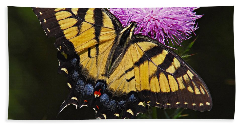 Butterfly Hand Towel featuring the photograph Tiger Swallowtail by William Jobes