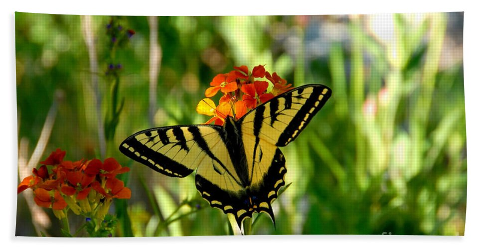 Tiger Tail Butterfly Hand Towel featuring the photograph Tiger Tail Beauty by David Lee Thompson