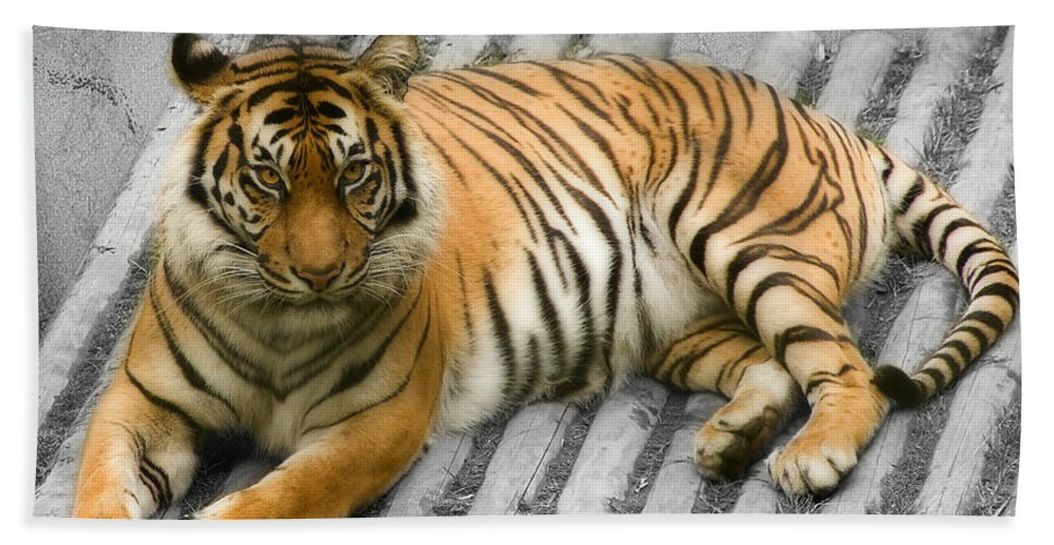 Animal Hand Towel featuring the photograph Tigers Look by Svetlana Sewell
