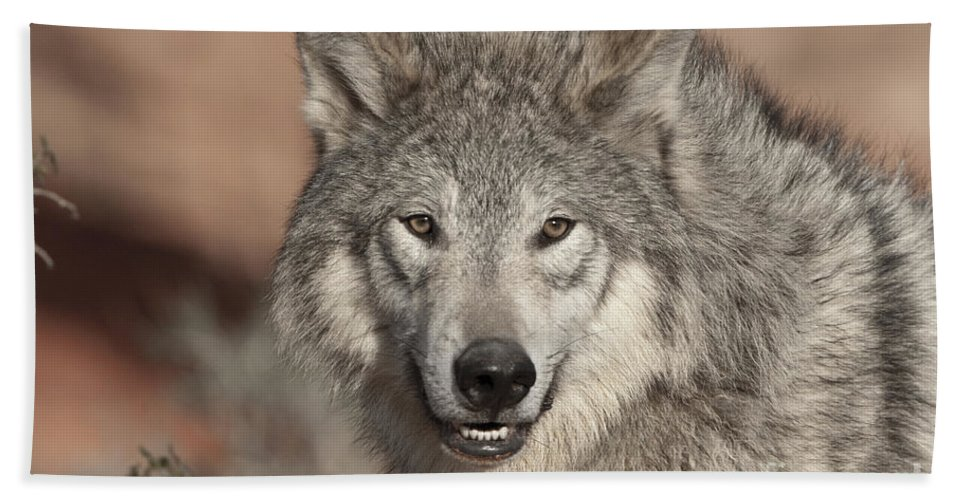 Wolves Hand Towel featuring the photograph Timber Wolf Portrait by Sandra Bronstein