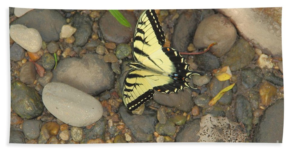 Butterfly Bath Sheet featuring the photograph Time For A Rest by Allen Nice-Webb
