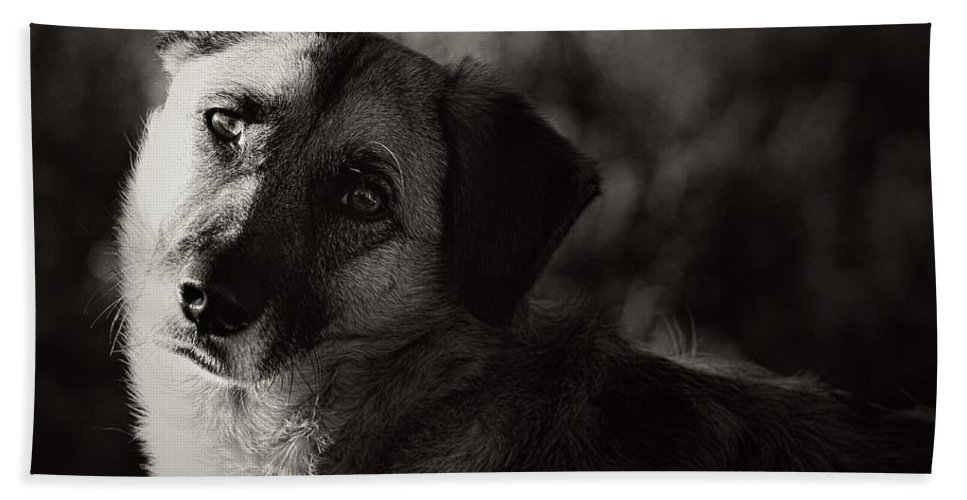 Dog Hand Towel featuring the photograph Time To Learn by Clare Bevan