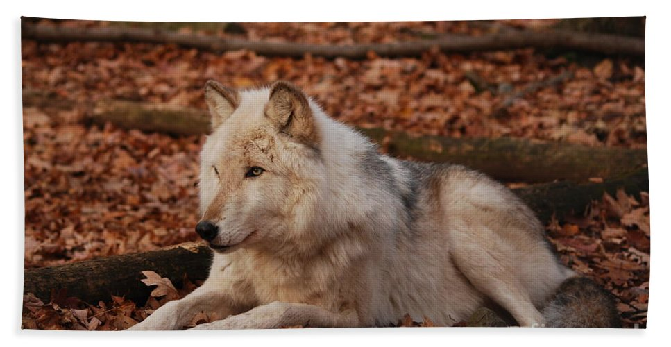 Wolf Hand Towel featuring the photograph Time To Rest by Lori Tambakis