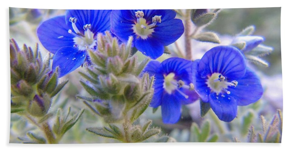 Lithospermum Diffusum Hand Towel featuring the photograph Tiny Blue Floral by Barbara St Jean
