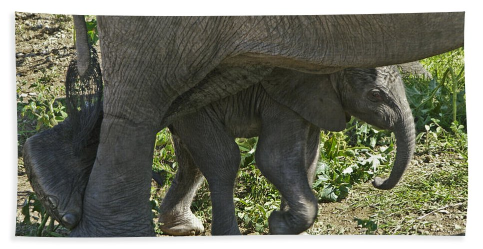 Africa Hand Towel featuring the photograph Tiny Newborn by Michele Burgess