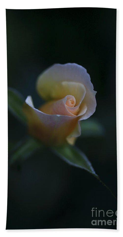 Flower Bath Sheet featuring the photograph Tiny Pink Rosebud by Deborah Benoit