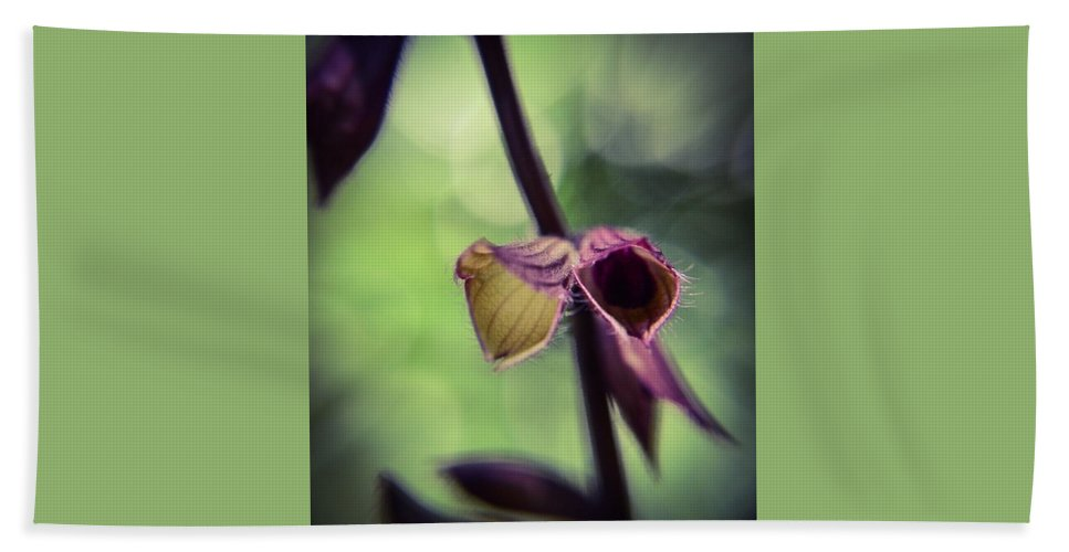 Purple Bath Sheet featuring the photograph Tiny Purple Flower by Sarah Kish