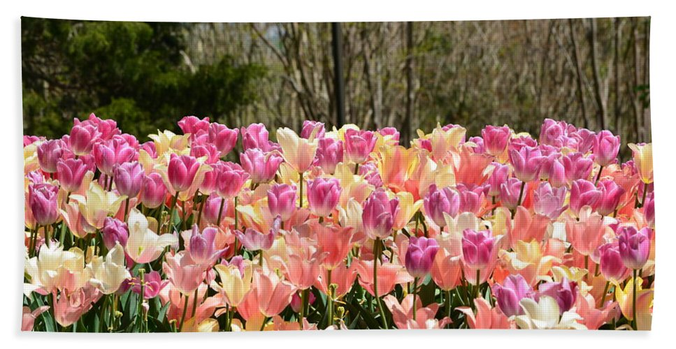Tulips Hand Towel featuring the photograph Tiptoe Among The Tulips by Ally White
